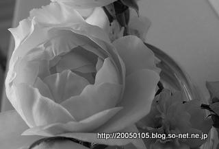 DSC03562 (1).jpg