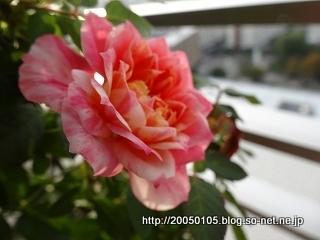 DSC04230.jpg