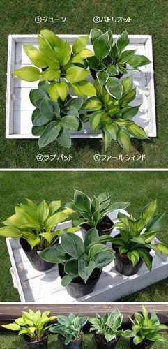 plantsmarket1.jpg