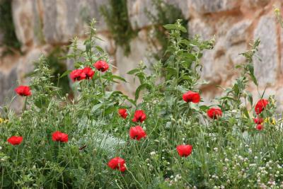 2009.04-28-05.08 Syria (Matsumuraさん撮影) 183.jpg