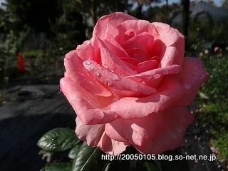 DSC02849-001.jpg