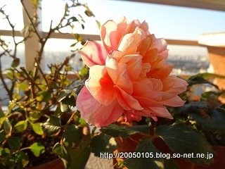 DSC06439.jpg