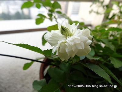 DSC09600.jpg